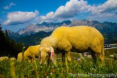 IMG_9897 (Photographie Maria) Tags: alm bergsee ennstal gipfel natur panorama reiteralm rippeteck schafe spiegelsee wandern ziege