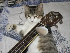 Why Cats Play (FolsomNatural) Tags: cat kitten ukulele spoof humor