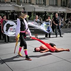 P1020660 (www.deshommesetdesanimaux.fr) Tags: corrida anticorrida nocorrida stopcorrida barbarie cruauté paris 269lifefrance
