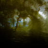 Trees In Water 119 (noahbw) Tags: d5000 desplainesriver dof nikon potawatomiwoods abstract blur depthoffield distortion forest landscape light natural noahbw reflection ripples river shadow spring square trees water woods
