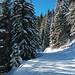Sinaia Sunny Skiing Day