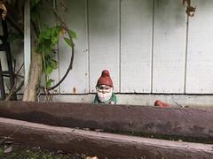 Postcard from Amélie (misterbigidea) Tags: fairytale redhat troll treasure guardian statue magical decoration yard hiding gnome garden amelie