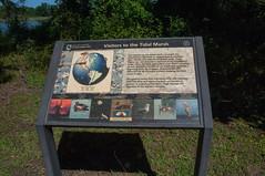 Terrapin Nature Area, Stevensville MD 24 (Larry Miller) Tags: naturepark conservation chesapeakebay maryland 2017