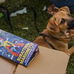 anche i cani lo sanno thumbnail