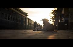 cinerise (Robins Mathew Z) Tags: cinema film railways indiatravel indianrailways