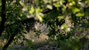 wild boar (Leen Goudappel) Tags: wildboar wild boar zwijn wildzwijn veluwe leuvenum landgoed gelderland bossen bos woods forest beautiful hiddensecrets hidden canon eos 750d sigma 150600mm nederland netherland holland europe world earth wildlife life wildlifephotography wildlifephotographer wildfotografie fotografie photo foto respect nature natuur