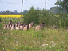 konikpaarden / wild horse ( konik horse ) (nature photography by 3620ronny.be) Tags: panasoniclumixdg100400mmf463asphpowerois maasvallei grensmaas nature weide natuurpark konikpaarden weilanden bomen zoogdieren gras groep belgie paarden panasoniclumixdmcgx8 boom outdoor bos bloem animal konikhorses bloemen natuurgebieden naturephotography natuurparkhochterbampd limburg gallop belgium maas www3620ronnybe natuurgebied animals zoogdier natuurfotografie overstromingsgebied maaskant