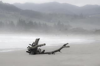 Beached dragon