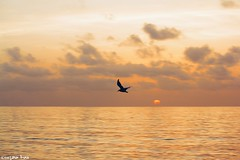 Your wings (gusdiaz) Tags: sunrise sunset florida miami beach south vacation irma storm ocean waves seagulls gaviotas sol arena mar beautiful relaxing relajante nature naturaleza canon canonphography fly flying freedom