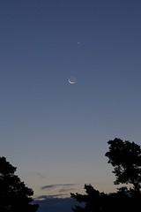 Moon, Venus and Regulus III (proefdier) Tags: astronomie astronomy astrophotography dämmerung mond moon morgen outdoor planet planeten regulus venus