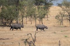 Tanzania (warrenkashley) Tags: level2ndcut levelfacebook levelfirstcut blackrhinoceros