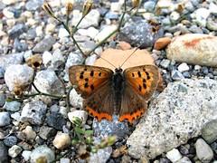 Butterfly 1444 (+780000 views!) Tags: butterfly borboleta farfalla mariposa papillon schmetterling فراشة