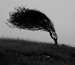 Black and White Project (ART NAHPRO) Tags: tree south downs cuckmere haven