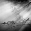 (Svein Skjåk Nordrum) Tags: bw bnw blackandwhite woods sunbeams ray misty fujikonakaya square