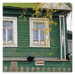 3-2 (Francoise100) Tags: cats isba green russia russie russland windows house goritsy