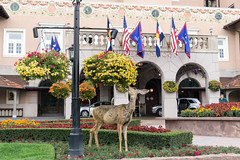 20170831-153139 (fritzmb) Tags: colorado coloradosprings event keyword northamerica place source sourcefritzmb usa animal building deer descriptor flag flower hotel mammal nature object plant public structure vacation