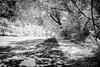 Sunday Afternoon (John C. House) Tags: everydaymiracles nik nikon infrared d70s sundayafternoon johnchouse walkway blackandwhite trees monochrome
