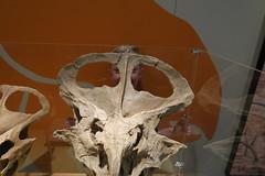 (andrew gallix) Tags: hornimanmuseum london frank