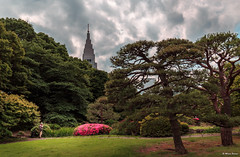 The Lone Photographer (dinero57) Tags: shinjuku garden photographer flowers japan shinjukugyoen tokyo lone lonesome trees dinero57 canon canondigital dslr canon5dmarkiii