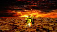 Soil survivor (jopperbok) Tags: jopperbok photoshop photomanipulation photoshopcontest manipulation potato plant survive hot planet soil earth strenght resilient resilience surrealism apocalypse sciencefiction contest week640 drought climate globalwarming brown