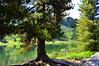 Hahnensee in St. Moritz (barbarasteinemann) Tags: see hahnensee st moritz graubünden engadin