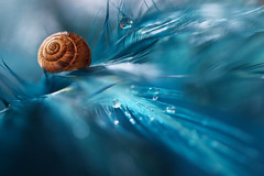 Nel mare in tempesta (Macro-photography) Tags: macro soft macrophotography canon 650d tamron90mm colors water drops nature closeup focus bokeh light shadows blue lightblue pastel surreal fantasyworld feather snail spiral