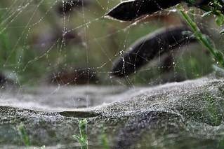 Web Connection.....HMM