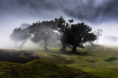 Purity (*Capture the Moment* (back 4 September)) Tags: 2017 fog insel island laurel lorbeer madeira mist nebel pauldaserralowlands sonye18200mmoss sonynex7 wetter wolkenclouds foggy