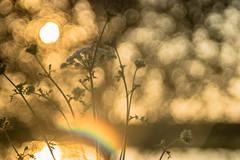 You found your golden Heart (*Capture the Moment* (back 4 September)) Tags: 2016 backlight f28 gegenlicht meyergörlitztrioplan10028 munich münchen sonnenuntergang sunset