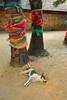 """Wat Pra That Lampang Luang (g e r a r d v o n k เจอราร์ด) Tags: artcityart art asia asia"""" asian buddha canon city colour canon5d3 expression eos earthasia flickrsbest fantastic flickraward lifestyle land lampang ngc newacademy outdoor totallythailand photos reflection stad this travel thailand thai tempel temple tree unlimited uit whereisthis where wat yabbadabbadoo"""