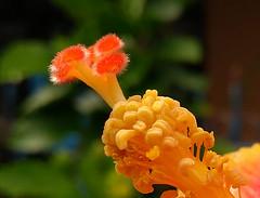crop-1-flower