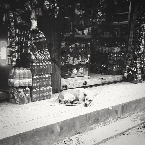 Stray dog. Dhaka. Bangladesh.