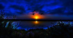 Morning Blues (beachpeepsrus) Tags: water westcoast huntingtonbeachcalifornia harbor horizon sunrise sky shore birds sihlouette light