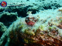 """Kalymnos Diving • <a style=""""font-size:0.8em;"""" href=""""http://www.flickr.com/photos/150652762@N02/36419304776/"""" target=""""_blank"""">View on Flickr</a>"""