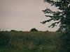2017-08-17_10-53-46 (torstenbehrens) Tags: ruhwinkel kreis plön schleswigholstein deutschland olympus ep1 digital camera feld sonnenblumen landschaft