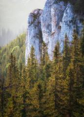 hawk stone (Kozics Tibi) Tags: bucovina carpathian landscape eos40d 70200f4lusm trees sunset