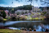 Stillness (dmunro100) Tags: tree winter mountloftybotanics adelaidehills southaustralia quiet peaceful canon eos 80d canonefs1755mmf28isusm