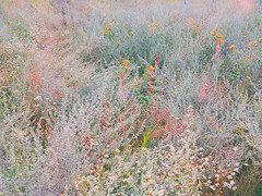 Herbage (Andrei Grigorev) Tags: grass plants flowers botanical abstract pattern nature tansy sagebrush camomile