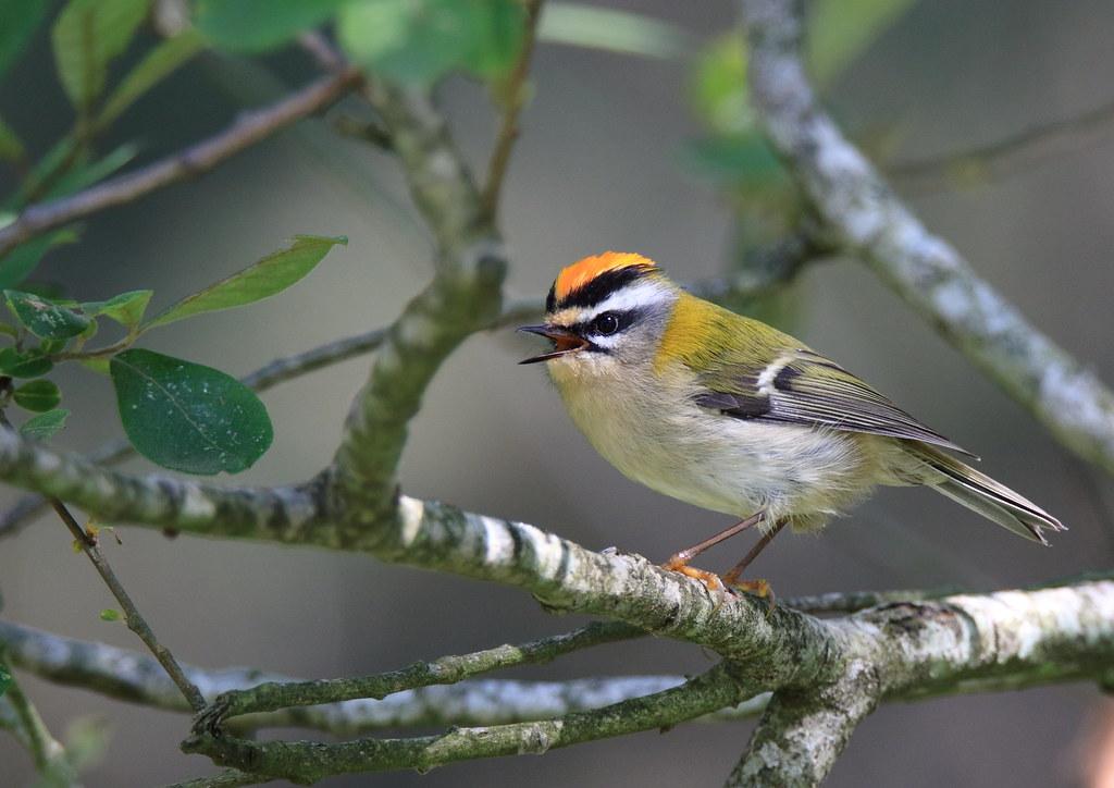 The world 39 s best photos of oiseau flickr hive mind for Oiseau france
