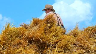 Amish Youth Atop a Hay Wagon