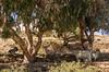 vacanze sarde_-62b (Trittonando) Tags: asinara sardegna sardinha asinello bianco carcere
