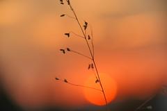 Sunset (jennichristine801) Tags: sunset sonnenuntergan kleines naturparadies rot silhuette
