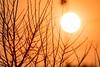 Bushfire Sunset (Peta Jade) Tags: glenroy sunset bushfire outdoors outside photography