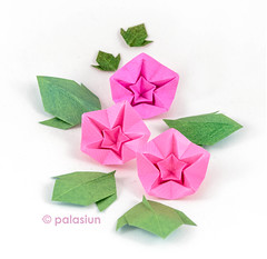 380A5608m (polelena24) Tags: origami flower morning glory