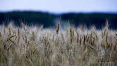 Morning in the Fields (stephenisabellemaggie) Tags: farmland beauce saintphilibert quebec canada landscape canon6d canon70200f28lisiiusm