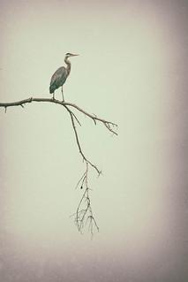 Heron's Domain