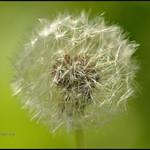 09.09.17 Blow me.. thumbnail