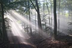 Morgensonne (reipa59) Tags: frühnebel natur nebel morgensonne sonnenstrahlen sonne waldweg wald stahlberg rheinlandpfalz