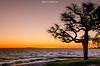 Bello Atardecer (NatyCeballos) Tags: puestadesol playa sunset sun atardecer arbol figura silueta uruguay coloniadesacramento nikond7000 cielo water contraluz
