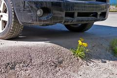 Our world... (cbrozek21) Tags: nature flower car managainstnature politics